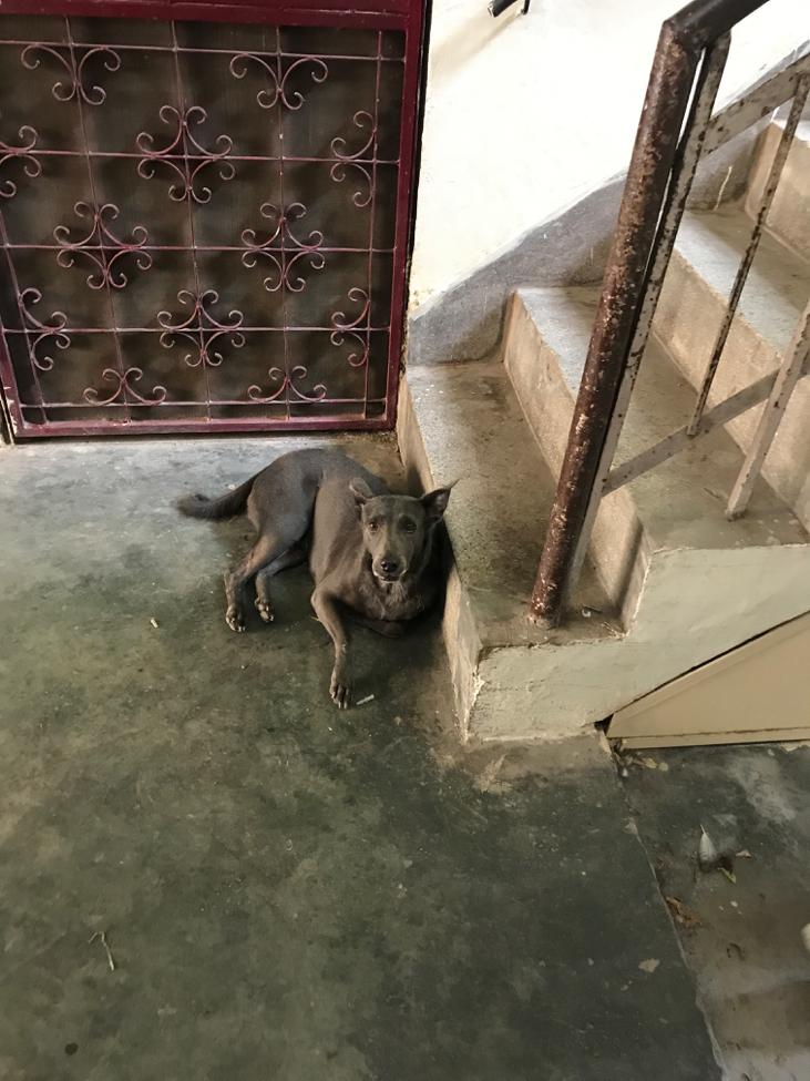 Dog In India