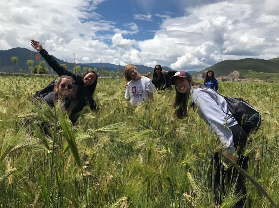six students in a rice field