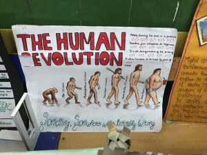 student poster about human evolution with hand-drawn pictures of monkeys and people