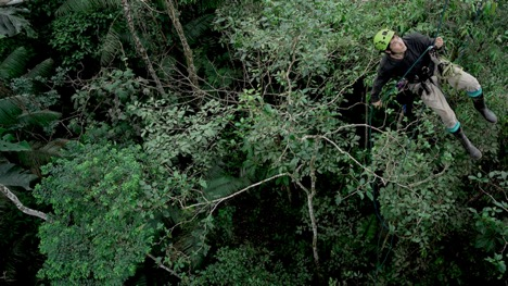 man repelling from tree in forest