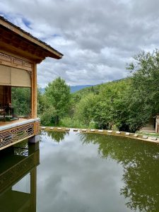 portrait view of koi pond