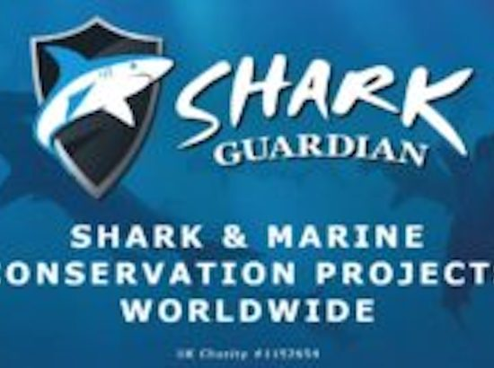 blue logo with shark clip art